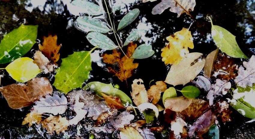 dusentieraupotager.fr du sentier au potager botanique plante utile carte identité étymologie description confusion astuce récolte jardin jardiner jardinier cueillir semer engrais nature sauvage fleur fleurs feuille feuilles racine graines fruits tiges fruit tige semence cru cuit plantes reconnaitre cultiver entretenir protéger manger recettes recette diy boire boisson thé vin liqueur alcool tisane soigner remède infusions, teinture mère, sirop, inhalation, gargarisme, homéopathie, pastilles à sucer, bain, cataplasme, huile essentielle drogue poison contre indication fumeur fumer cosmétique parfum bio-indicatrice maraicher alimentation soigner culture semis phytothérapie engrais vert couvre sol teinture tinctorial laine soie bois chauffage artisan artisanat osier oseraie salade croyances coutumes conte histoire division taille conseil animation nature sensibilisation environnement naturel animateur sortie découverte DSAP